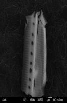 space diatom 3